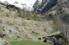 Scopula immorata: Larval habitat in the Alpes-Maritimes in April 2012: higher growing rocky meadows and forbs  [N]