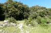 Jodia croceago: Larval habitat in Sardinia: margin of a Quercus ilex forest on Montiferru (May 2012) [N]