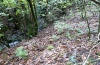 Euplexia dubiosa: Larval habitat in the laurel forest (Madeira, Encumeada, March 2013) [N]