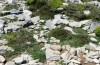 Chersotis laeta: Larval habitat in the Ida mountains in Crete in early May 2013 [N]
