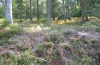 Hyppa rectilinea: Larval habitat in the northern Black Forest (early October 2010) [N]