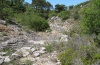 Limenitis reducta: Habitat (Provence, France): dry and hot open scrub [N]