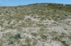 Zygaena orana: Larval habitat in Sardinia: dunes at the southern edge of the Sinis peninsula, May 2012. [N]